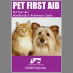 Pet Guide Promotional First Aid Kit